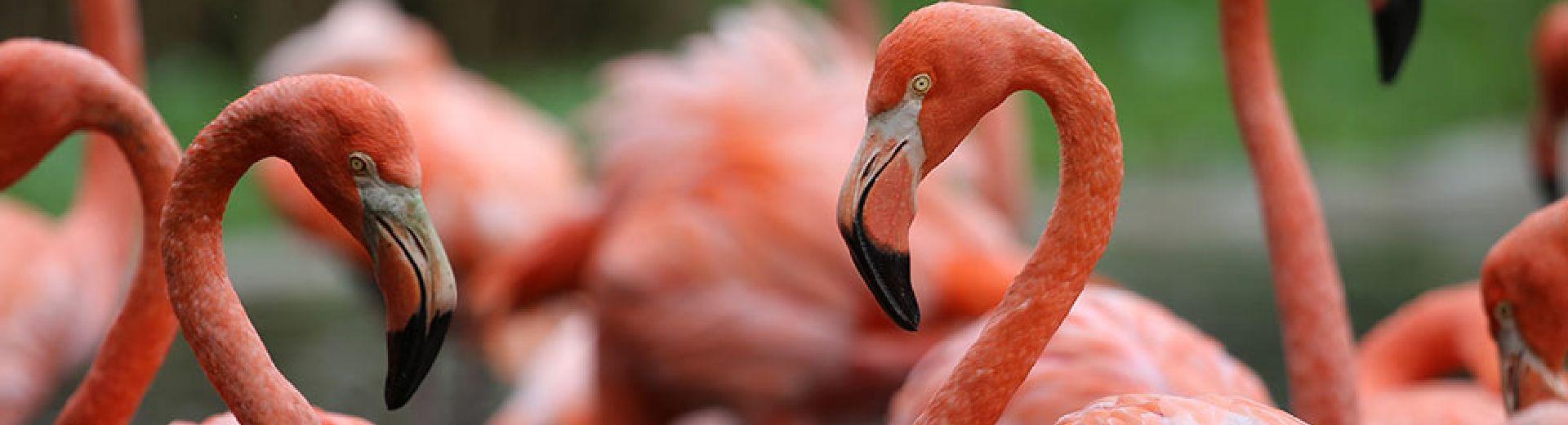 Vogelpark Irgenöd